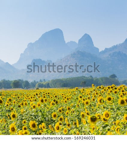 Thousand of sunflower in farm with background of mountain in Lopburi, Province of Thailand. #169246031