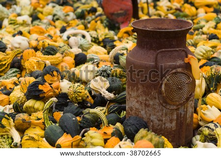 Thousands of seasonal Gourds for sale during the fall season.