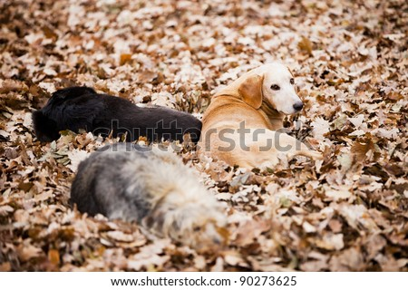 Three abandoned dogs, stray dogs resting in the park on fallen leaves