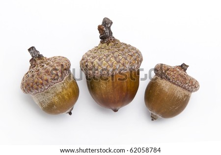 Three acorns, isolated on white