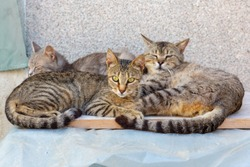 Three adorable street cats in Krk, Croatia