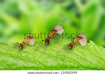 Three ants are carrying food.
