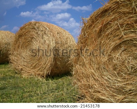 Three bails of hay on farmland