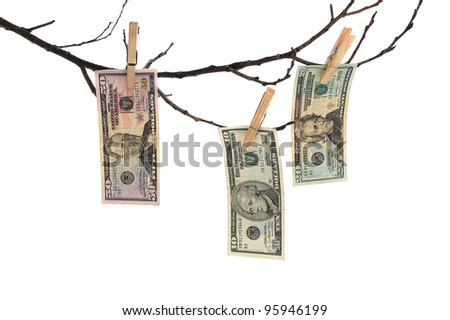 three banknotes of dollar on branch