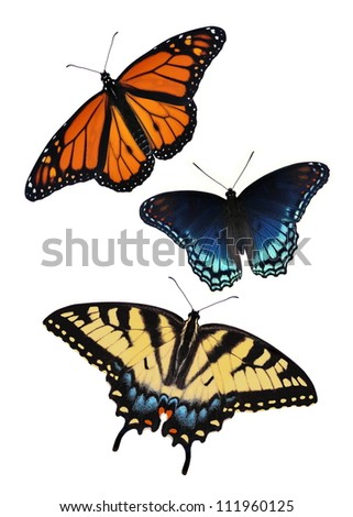 Three beautiful butterflies isolated on a white background.