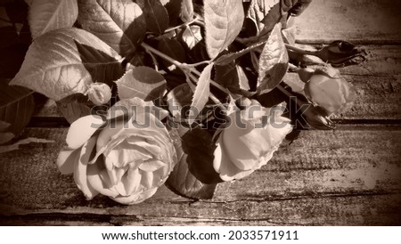 Three beautiful fresh roses on a wooden table. Congratulation postcard. Sepia and brown tone with dark vignetting around the edges Stockfoto ©