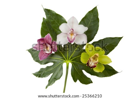 Three beautiful orchids (purple, white, green) on a large leaf, isolated on white, with clipping path