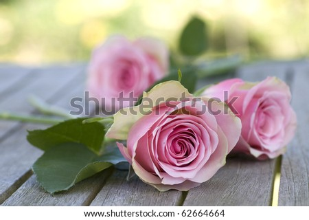 Three beautiful pink roses with leaves lying on a wooden table