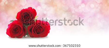 Three Beautiful Red Roses Website Header -  Three red rose heads stacked on left hand side on a misty pink peach colored bokeh background with plenty of copy space on right hand side