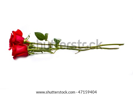 three beautiful roses isolated on white