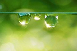 Three beautiful round drops of morning dew on grass sparkle in morning light. Dew drops macro in nature outdoors.