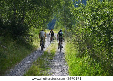 Three bickers on morning forest road - stock photo