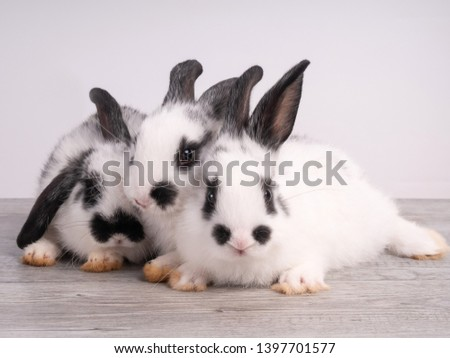 Three black and white cute rabbit on wood table. White and black dot on face rabbit.