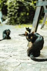 three black cats in the street