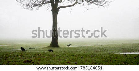 three black crows on the grass under a leafless winter tree, and behind them all fog in a spooky atmospheric soft ethereal picture with lots of space for text