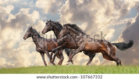 three black horses #107667332