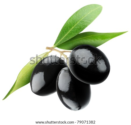 Three black olives on branch with leaves isolated on white