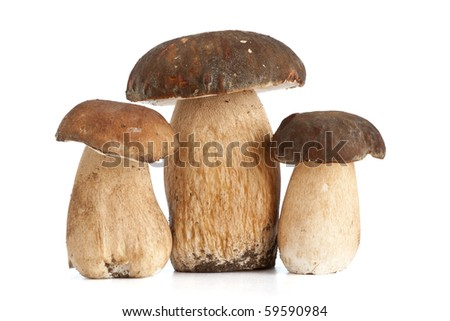 three Boletus Edulis mushroom isolated on white background