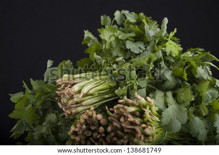 three bunches of green fresh coriander on a black background