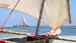 three canoe dhow sailing outriggers on an island seashore with sails filling with the wind ready to sail