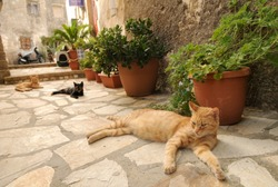 Three cats living in the streets of greek city Corfu