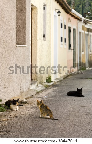 three cats living in the streets of greek village at Corfu