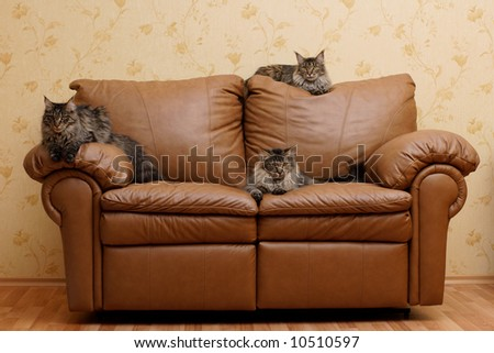 Three cats on a sofa