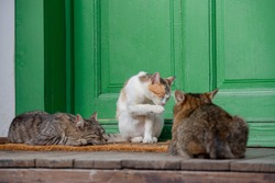Three cats on the porch. Cats outside at the entrance to the home.