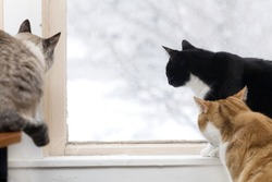 Three cats watch the birds outside on a snowy day