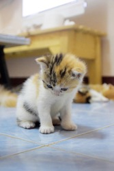 Three color kittens are learning to walk four feet. To explore the area