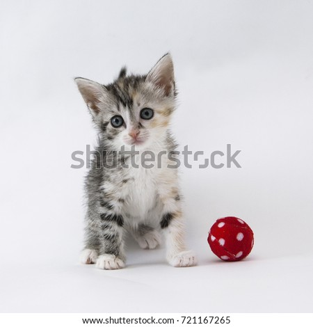 Three color's kitten with toy #721167265
