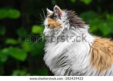 stock-photo-three-colored-cat-282429422.jpg