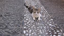 Three colored cat on the streets of Spain