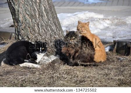 Three colored cat sitting near a tree.