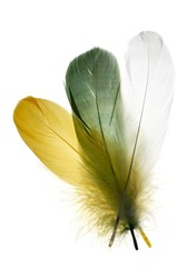 Three colorful bird feather isolated on white.