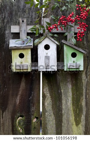 Three colorful birdhouses on old wooden fence with red Nandina berries. (Nandina domestica) Plenty of room for text.