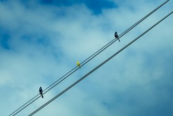 Three colorful birds standing on a sunny day with clouds