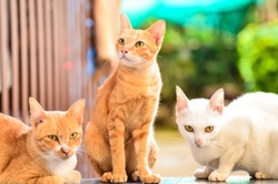 Three colorful cats