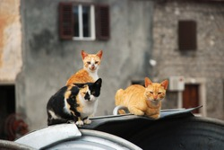 Three colorful cats sitting on the dumpster with Mediterranean houses in the background