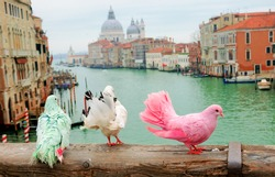 Three colorful pigeons on bridge railing in Venice (Italy). A view from Accademia bridge on Grand Canal and Basilica Santa Maria della Salute. Romantic vacation background.