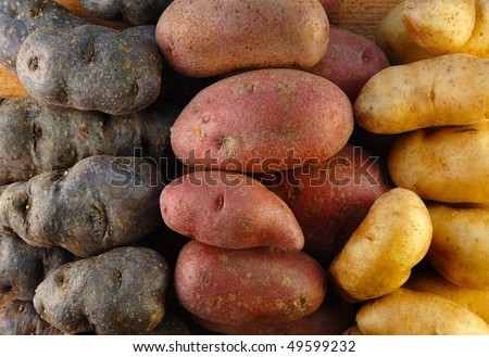 Three colors of fingerling potatoes.