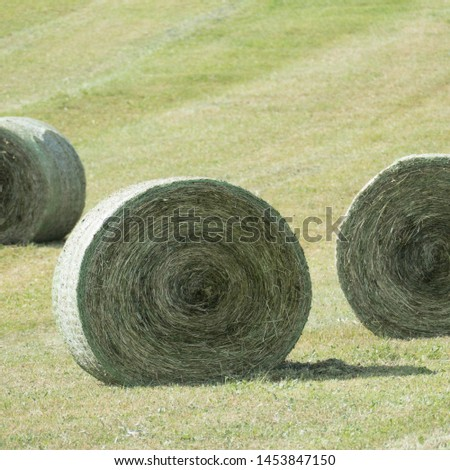 Three compressed and bounded silage bales. The two silage bales on the sides are only about half visible and the round bale in the middle is with shadow. Copy space in the blurred background. #1453847150