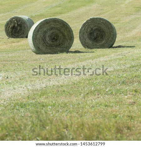 Three compressed silage bales with round bale nets, but without wrapping foil. Copy space in the front of the picture, in the green meadow. #1453612799