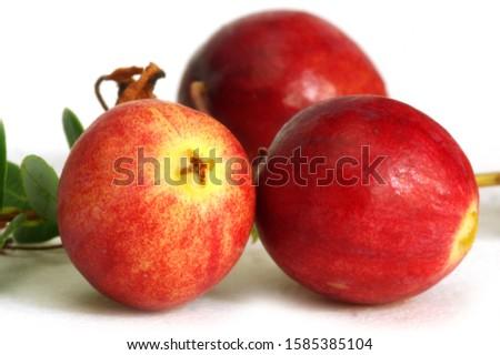 three cranberries macro photo autumn