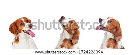 Three cute dog isolated on a white background