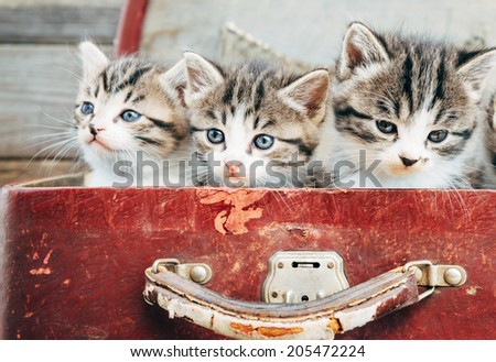Three cute kittens in vintage suitcase on a wooden background