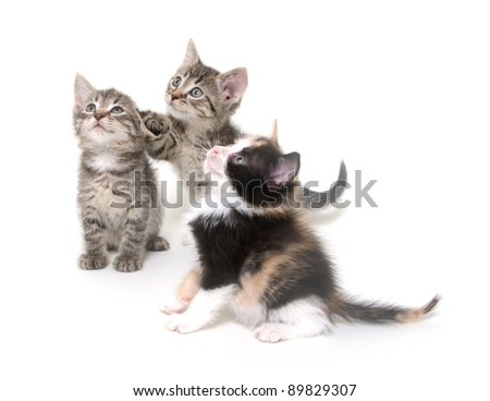 Three cute kittens playing on white background