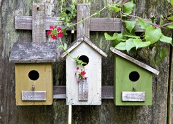 Three cute little birdhouses on rustic wooden fence with beautiful vines and red  blooms on them