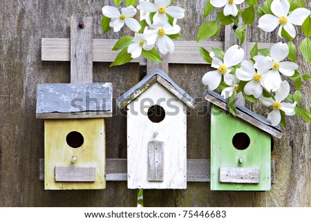 Three cute little birdhouses on rustic wooden fence with beautiful white Dogwood blooms on them - stock photo
