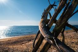 Three dead pine trees on the beach under the glaring Sun.